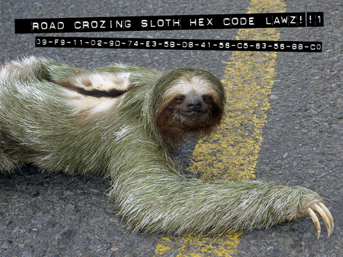 Sloth, crawling